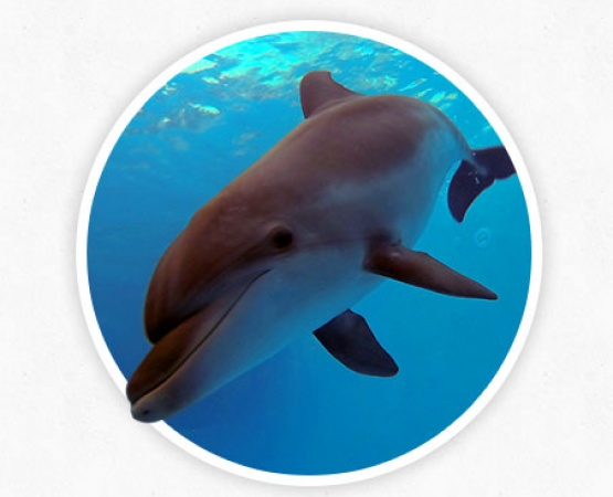 Indications for dolphin therapy - photos and information at therapynemo.com