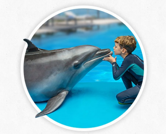 Dolphin therapy method - photos and information at therapynemo.com