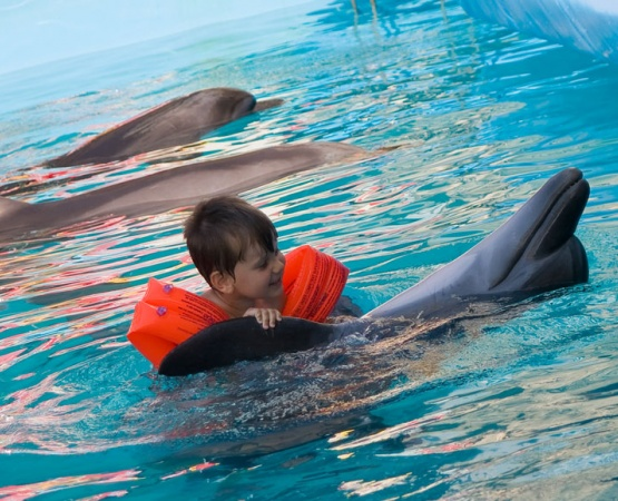 Dolphin therapy in Thailand. Pattaya. - photos and special offers